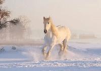 caballo en kiche