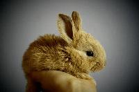 conejo en kiche