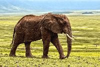 elefante en kiche