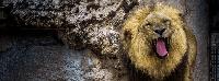 leon en kiche