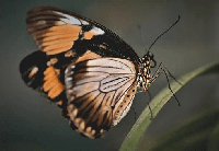 mariposa en kiche
