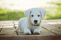 perro en kiche