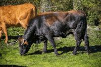 toro en kiche