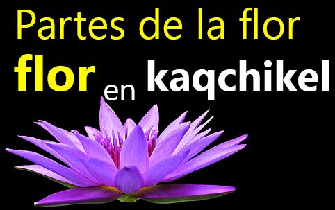 Partes de la flor en kaqchikel