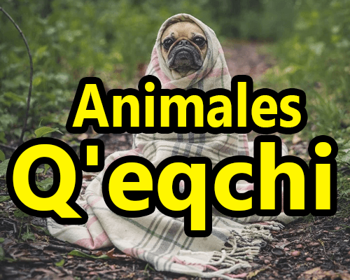 Animales en Qeqchi