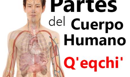 Partes del cuerpo humano en qeqchi q'eqchi español