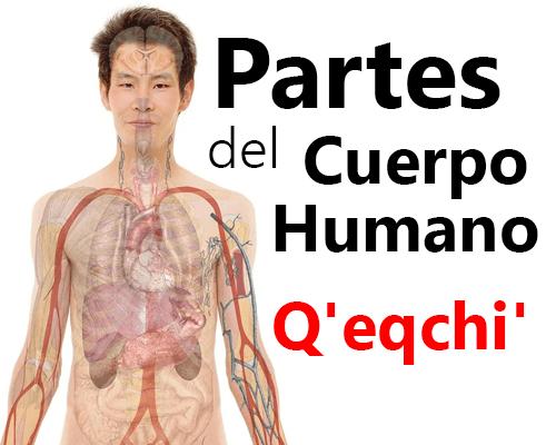Partes del cuerpo humano en Qeqchi