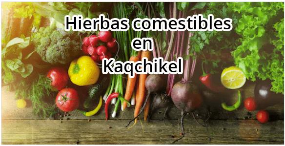 plantas comestibles en kaqchikel y español