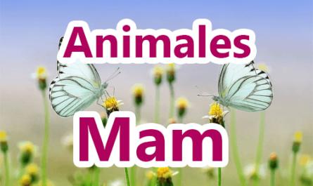 Animales en mam y español