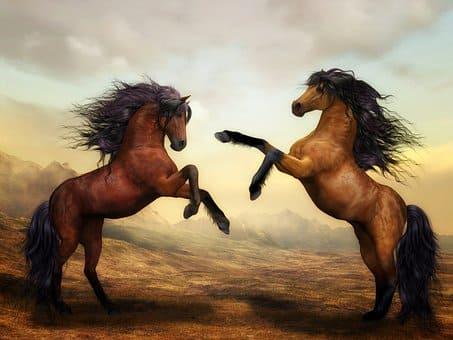 caballo en chuj