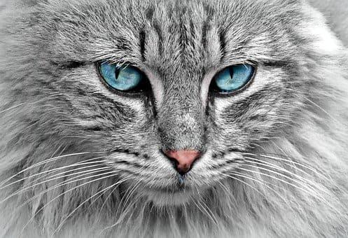 gato en chuj