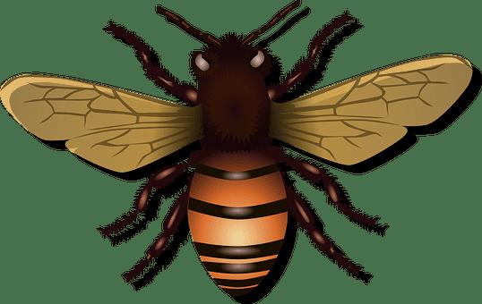 mosca en chuj