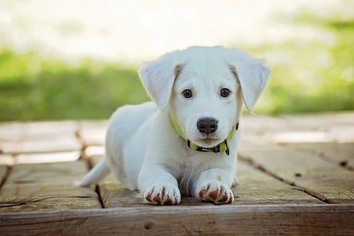 perro en kaqchikel y español