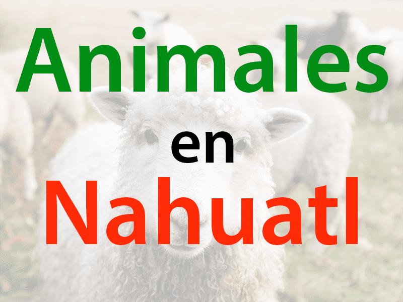 animales en nahuatl